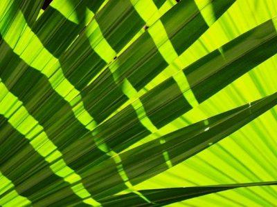 palm leaf wraps